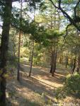 Рубцовск Сосновый бор, 30км. от города